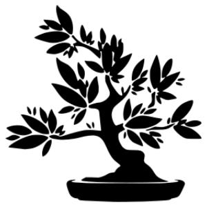 Bonsai matrica kép