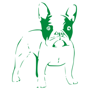 Francia bulldog 006 matrica kép