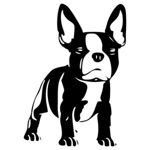 Francia bulldog 008 matrica kép