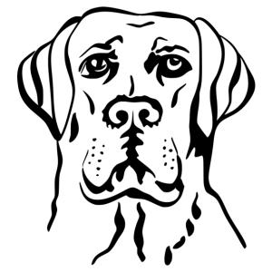 Labrador 002 matrica kép