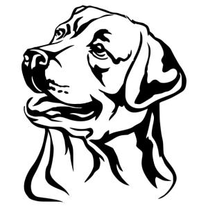 Labrador 004 matrica kép
