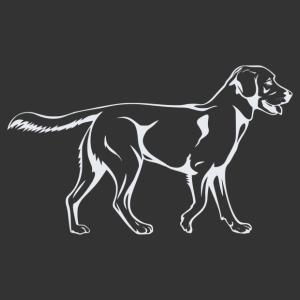Labrador 005 matrica kép