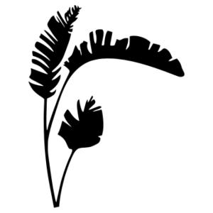 Pálma matrica kép