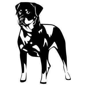 Rottweiler 005 matrica kép